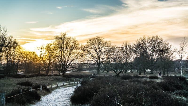 Landskapet i Boberger dyner vid solnedgången på vintern arkivfoto