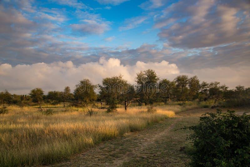 Landskapet Kruger-Medborgare-parkerar in royaltyfria bilder