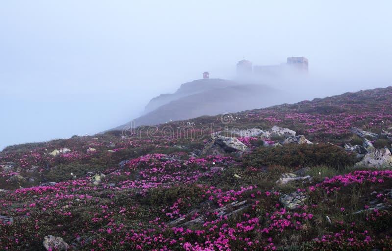 Landskapet med den gamla observatoriet som är på berget som täckas med den ljusa dimman Gräsmatta med vaggar och rosa rhododendro fotografering för bildbyråer