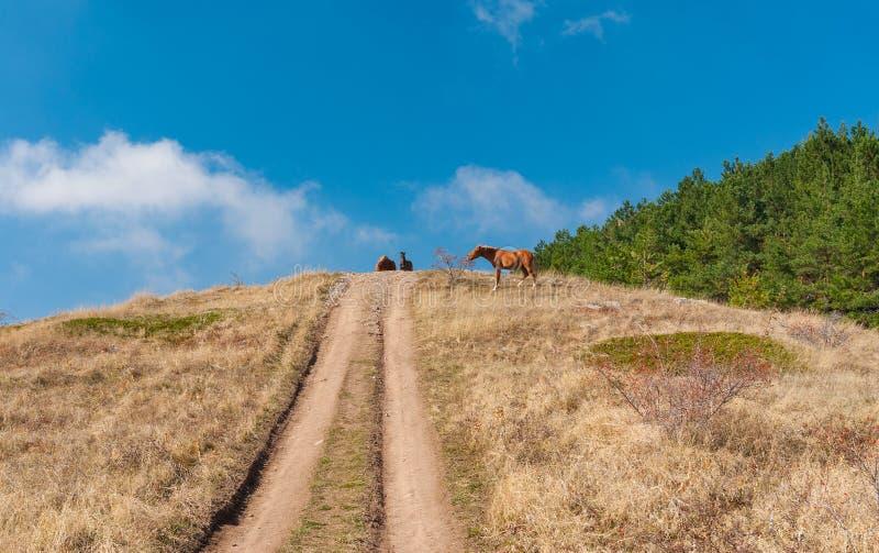 Landskapet med jordvägen och tatar hästar på ett berg betar Demerdzhi, Crimean halvö royaltyfri bild
