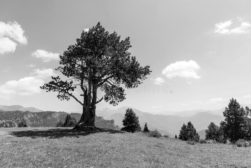 Landskapet med sörjer på Collen de la botella i området Pal Arisal royaltyfri bild