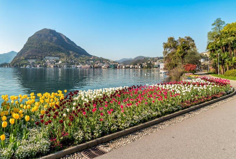 Landskapet med sjön Lugano och färgrika tulpan i blom från Ciani parkerar i vår royaltyfria foton