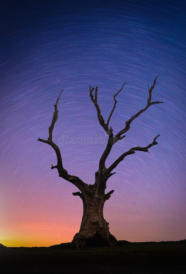 Landskapet med stjärnor skuggar över dött stort träd för kontur på kullen arkivfoton
