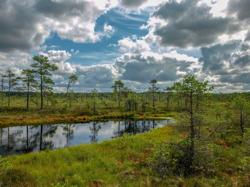 Landskapet med svarta träsksjöar som omges av litet, sörjer och björkträd och grön mossa med blå himmel arkivfoton