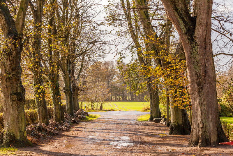Landskapet och gatan i höst fjädrar utomhus- royaltyfria bilder