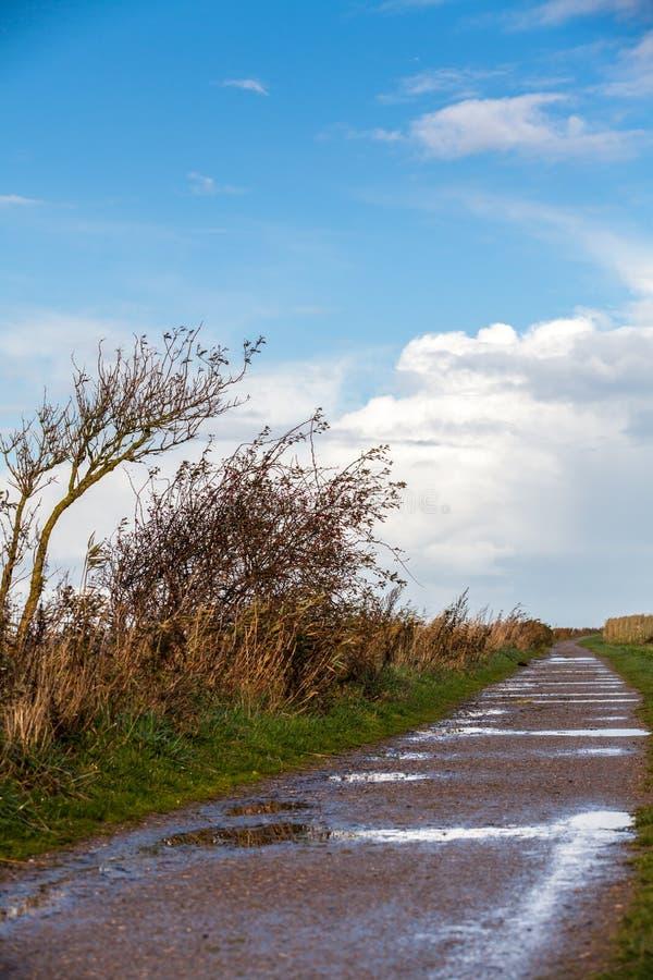 Landskapet och gatan i höst fjädrar utomhus- royaltyfria foton