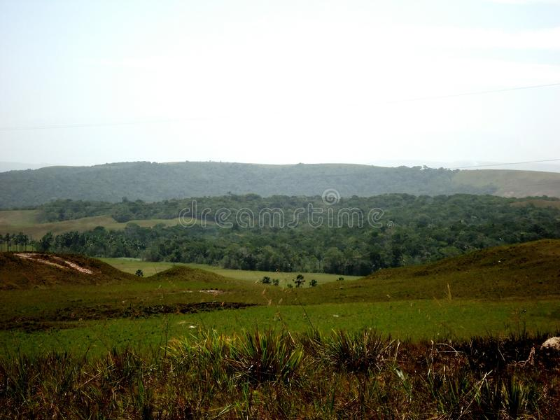 landskapet parkerar den stora savannahen amazon Venezuela royaltyfri bild