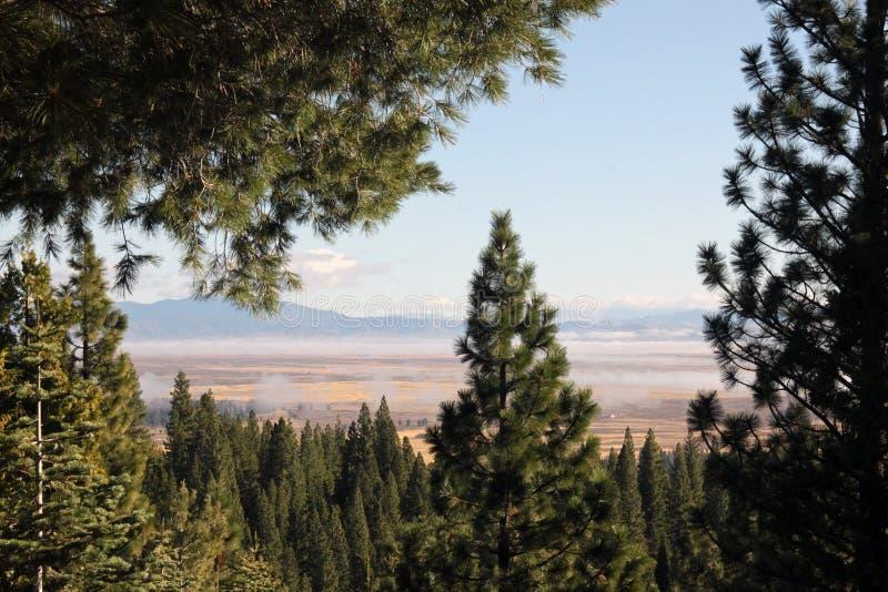 Landskapet som förbi inramas, sörjer träd arkivfoto
