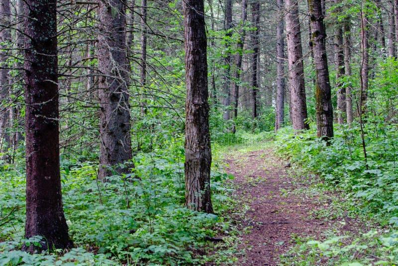 Landskapfoto av en fotvandra slinga på Duck Mountain Provincial Park fotografering för bildbyråer