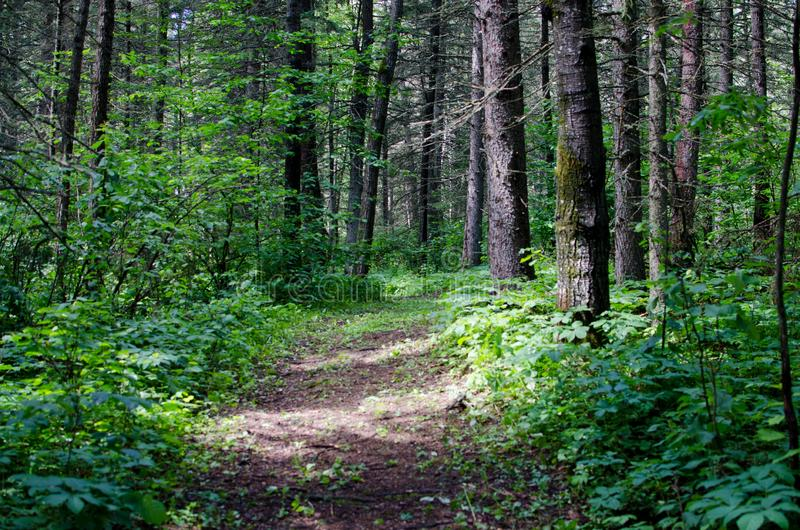 Landskapfoto av en fotvandra slinga p? Duck Mountain Provincial Park royaltyfri bild