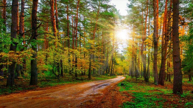 Landskaphöstskog på ljus solig dag Väg i färgrik skogsmark Solstrålar i Autumn Forest royaltyfri fotografi