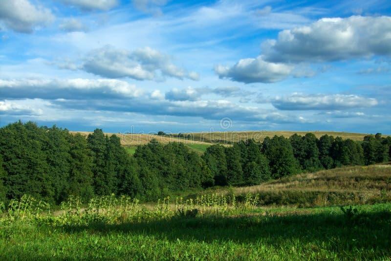 Landskaphimmel, skog, kullar, solrosor royaltyfri bild