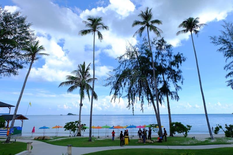 Landskapsemesterortträd på stranden arkivbilder