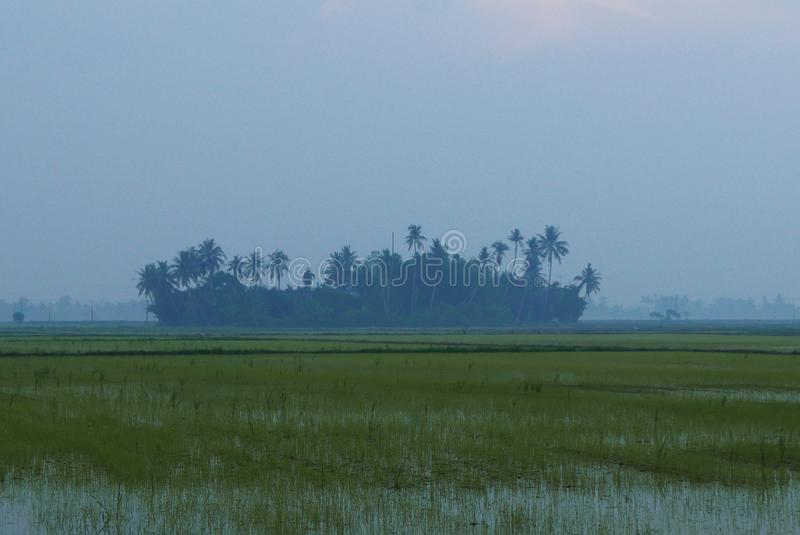 Landskapsikt av den lilla byn som omges av risfältfältet under soluppgång royaltyfria foton