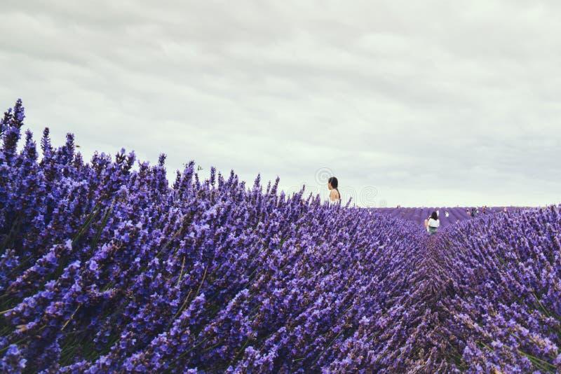 Landskapsikt av det Hitchin lavendelfältet och besökare arkivbilder