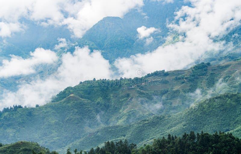 Landskapsikten av ris terrasserar och härliga berg och dimma royaltyfri foto