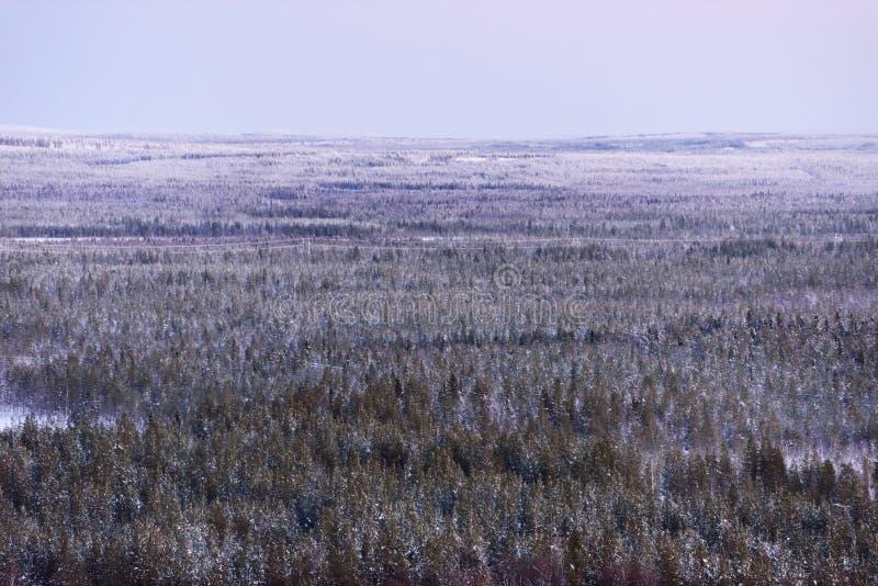 Landskapskogen har täckt med himmel för tung snö och solnedgångfrån landskap för bästa sikt i vintersäsong på Lapland, Finland arkivbild