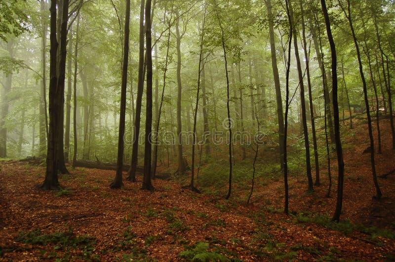 landskapskogsmark arkivfoton