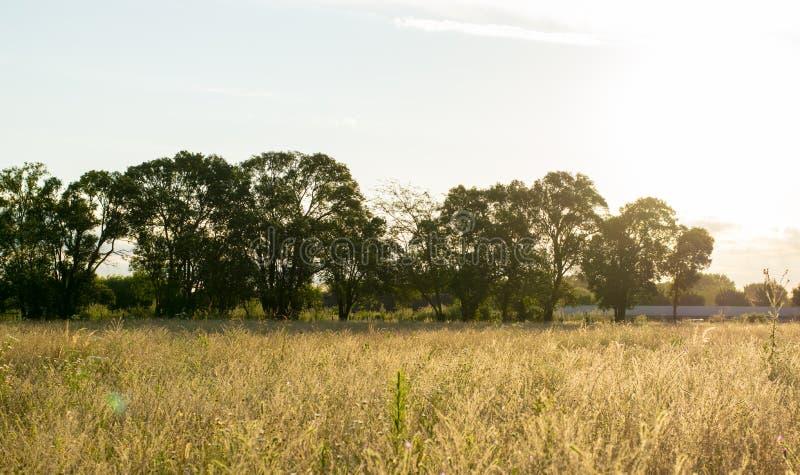 Landskapsolnedgång av fältet med solljus arkivfoton
