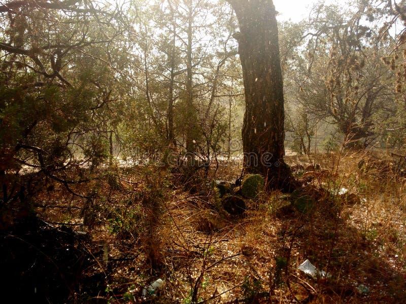 Landskapsskog i coahuila mexico royaltyfria foton