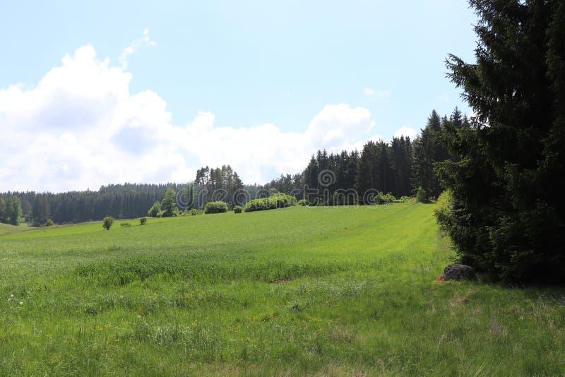 Landskapträd och gras royaltyfri fotografi