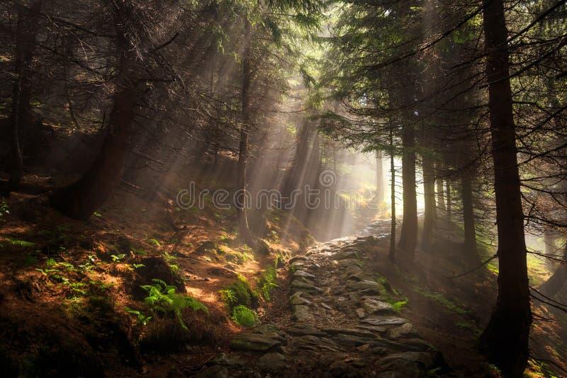 Landskapvisningstrålar av ljus skiner till och med träden i en fo royaltyfri fotografi