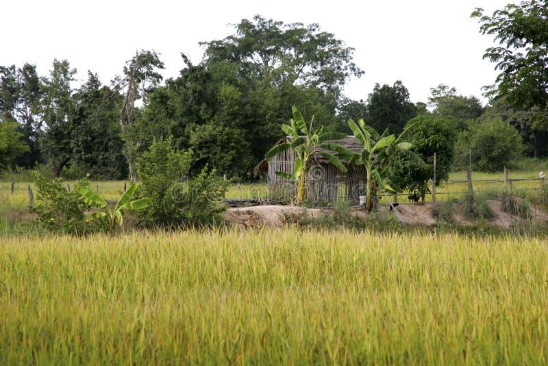 Landskapwirhricefields Thailand arkivbilder