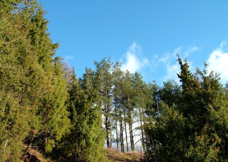 Download Landspace Cade imagem de stock. Imagem de plantas, vida - 70615