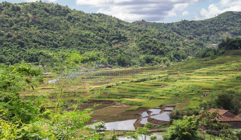 Landspace di Muong La, Son La, Viet Nam fotografia stock
