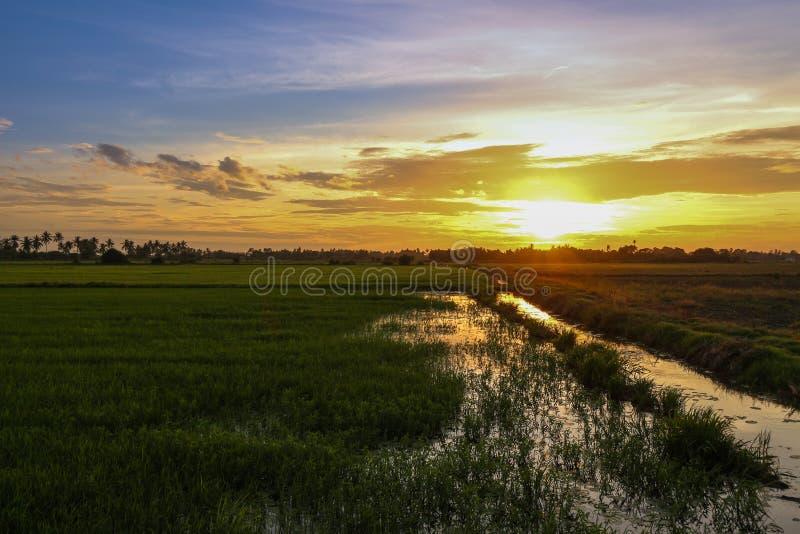 Landspace sikt över koloni för risfältfält i solnedgång royaltyfri bild