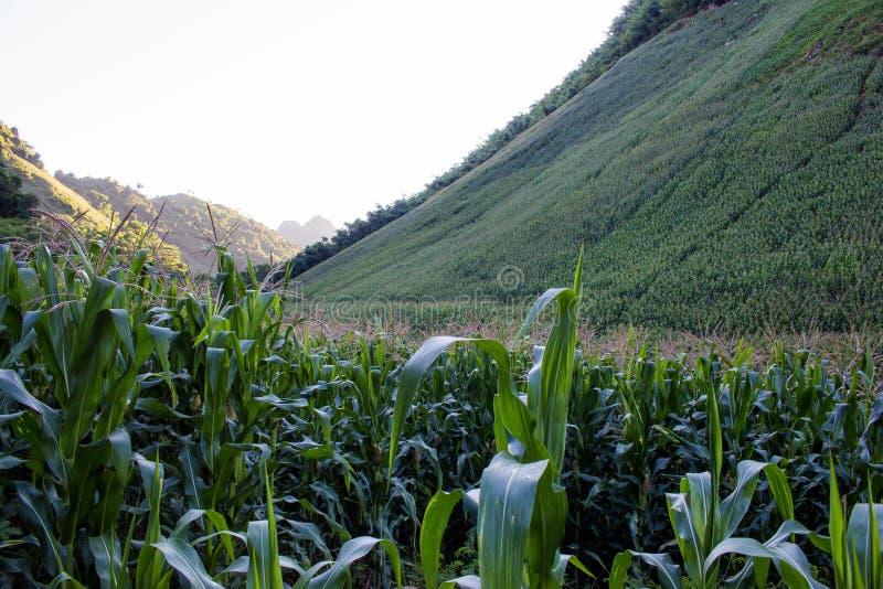 Landspace von Muong La, Son La, Viet Nam lizenzfreies stockbild