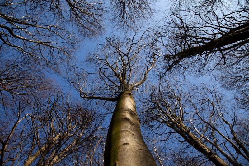 landsparkpenrhos royaltyfria foton