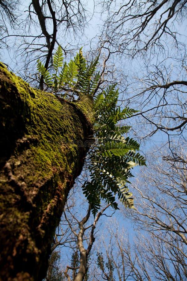 landsparkpenrhos royaltyfri foto