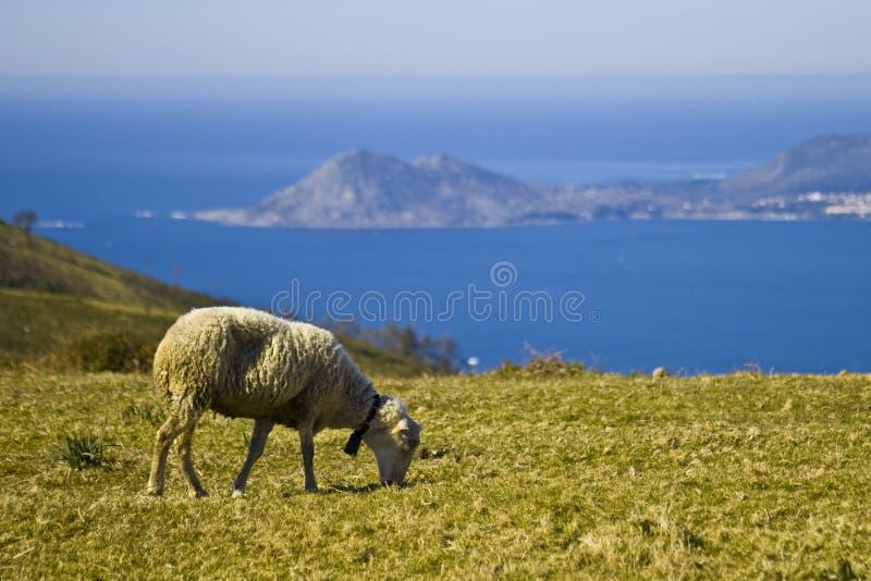 Landspe galego imagens de stock royalty free