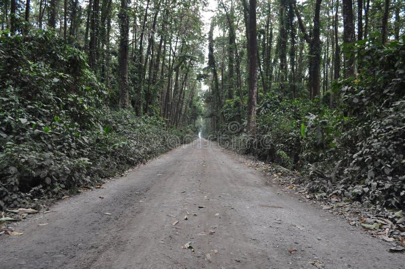 Landstraße auf einem Wald lizenzfreie stockfotos
