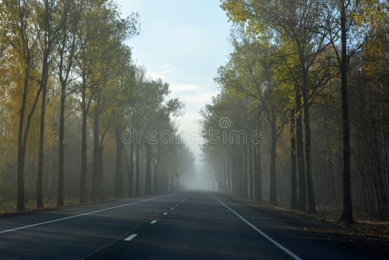 Landstraße an einem nebeligen Morgen stockbilder