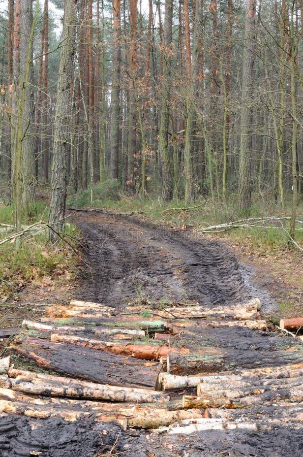 Landstraße im Wald stockfotografie