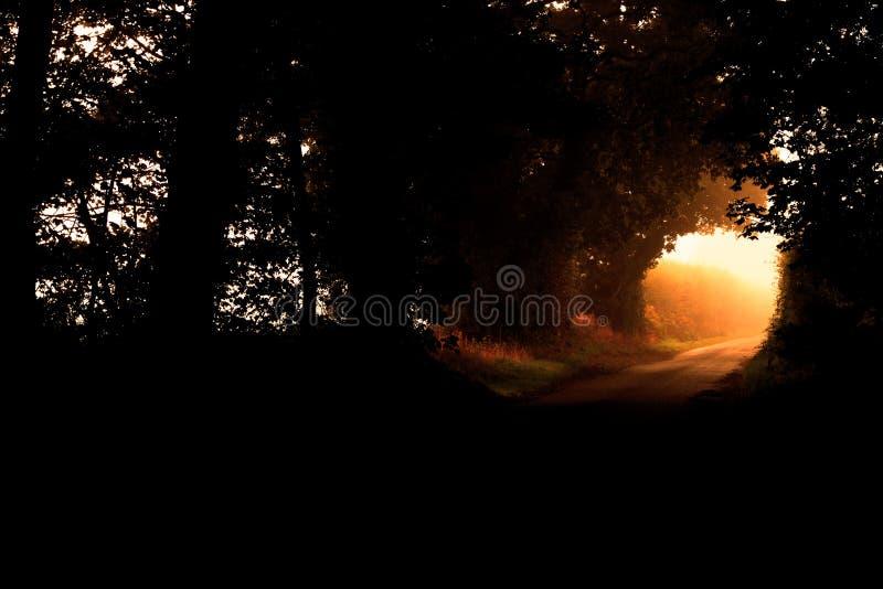 Landstraße mit dem Sonnenaufgangsonnenlicht, das durch das Ende eines dichten Tunnels der Bäume glänzt stockfotos