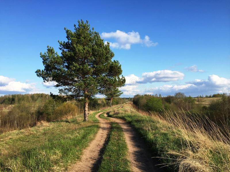 Landstraße mit einzelnem Baum stockfoto