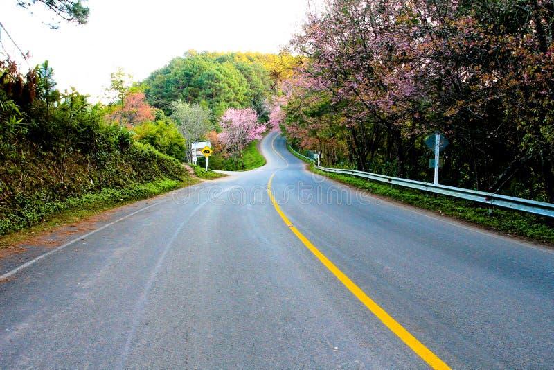 Landstraße in Nord-Thailand, in der Straßen- und Kirschblüte-Blume lizenzfreie stockbilder