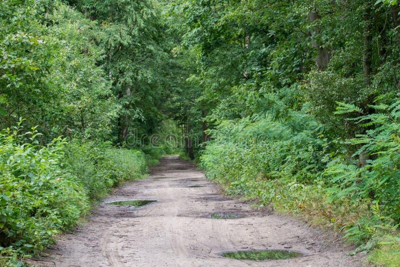 Landstra?e im Sommerwald lizenzfreie stockbilder