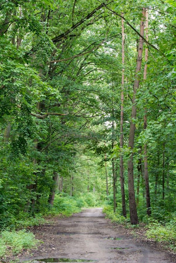Landstra?e im Sommerwald lizenzfreie stockfotografie