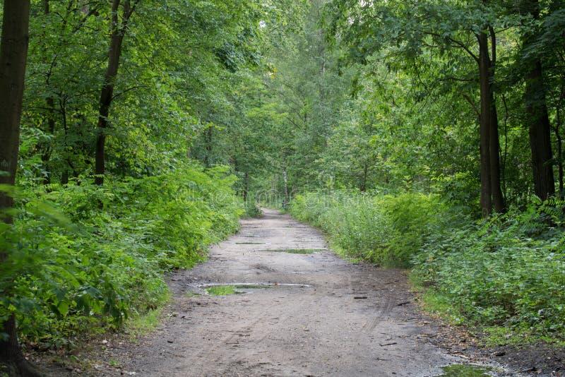 Landstra?e im Sommerwald stockfotografie