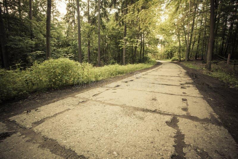Landsväg i skogen royaltyfria foton