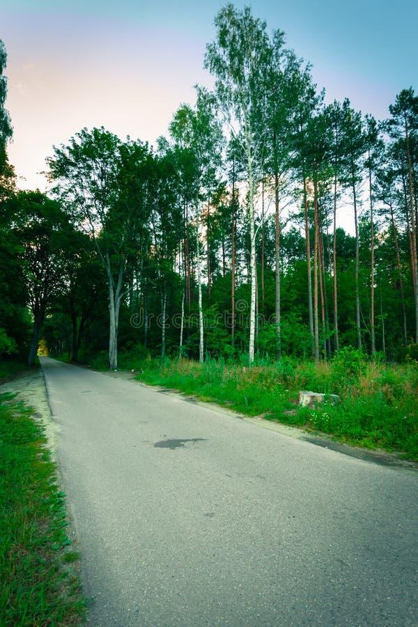 Landsväg i skogen arkivfoto