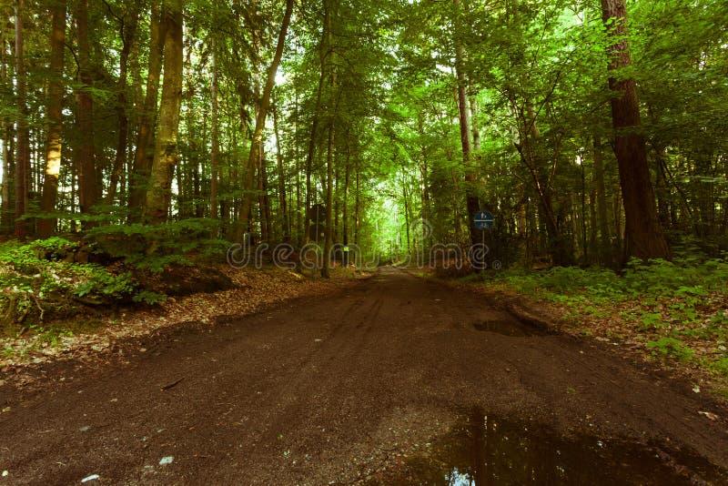 Landsväg i skogen royaltyfri foto