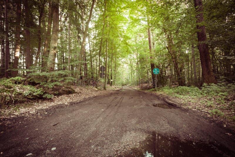 Landsväg i skogen royaltyfri fotografi