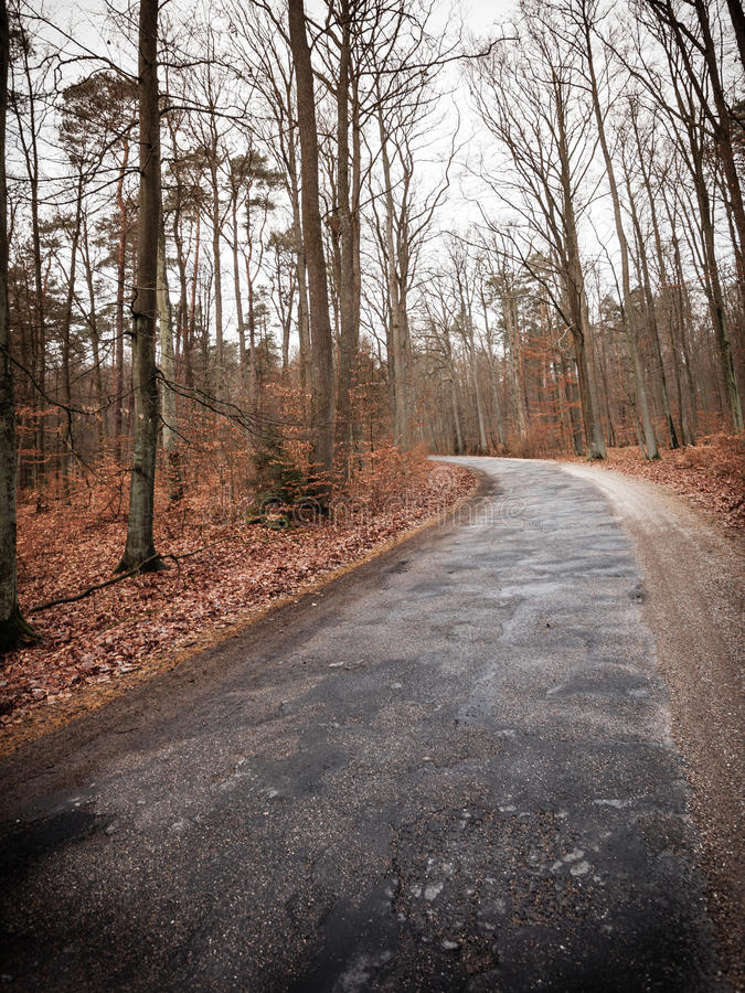 Landsväg i skogen på dimmig dag fotografering för bildbyråer