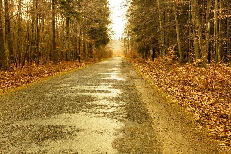 Landsväg i skogen på dimmig dag royaltyfri bild