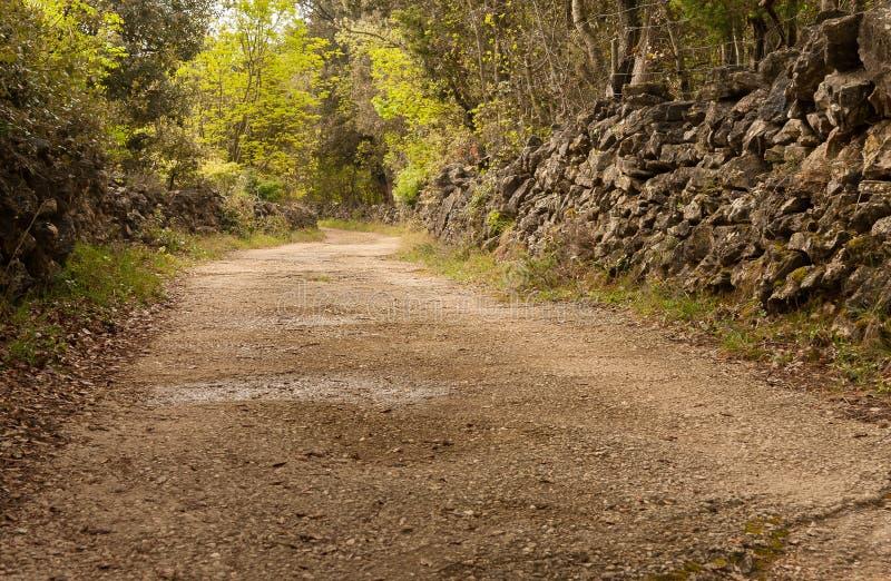 Landsväg med stenväggar på ön av Cres royaltyfri bild
